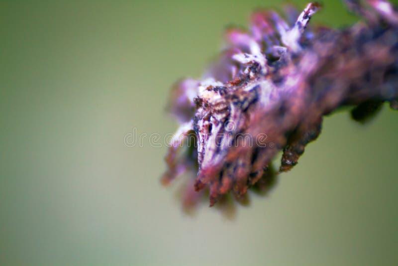 okropne chore części rośliny zbliżenie zdjęcie stock