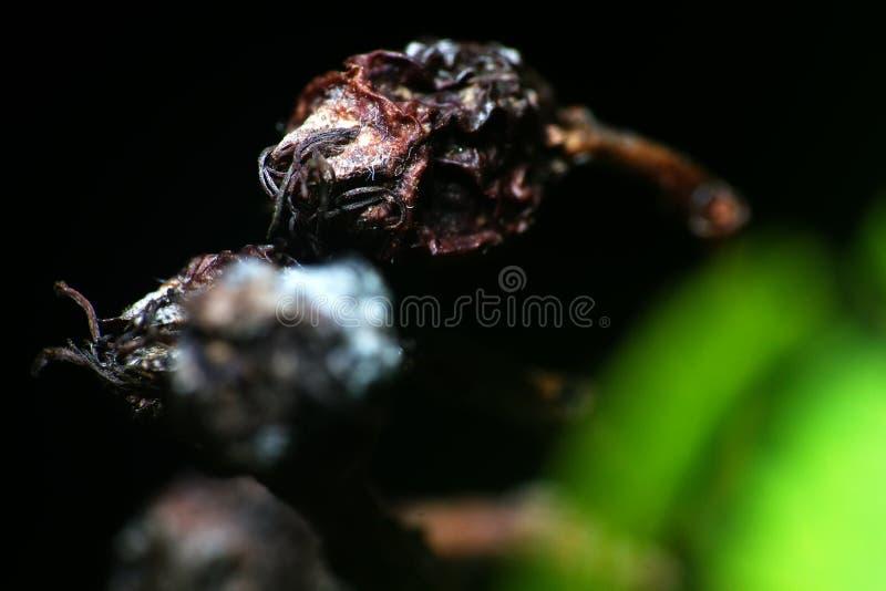 okropne chore części rośliny zbliżenie zdjęcia royalty free