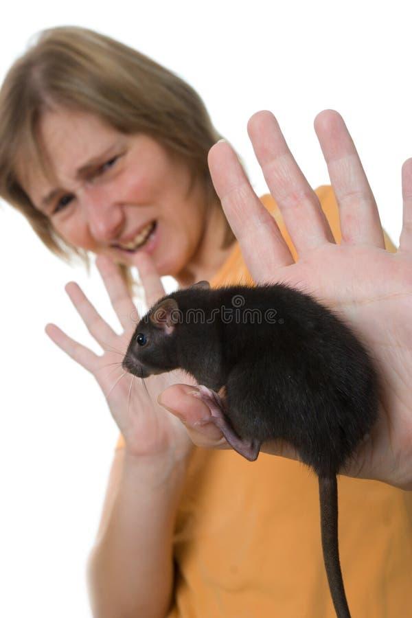 okropne szczura fotografia stock