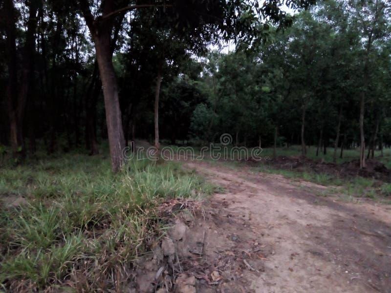 okropny las i ciemność obrazy stock