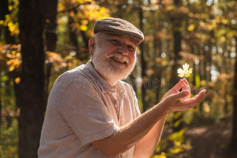 Oktober är här igen Glad pensionär samlar in blad i oktober dag Högre män åtnjuter oktobendelaget Glad oktober fotografering för bildbyråer