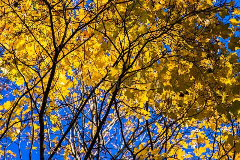 Oktober-Blau 4 stockfotografie