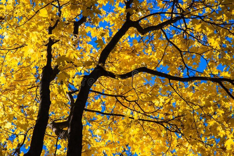 Oktober-Blau 7 lizenzfreie stockbilder