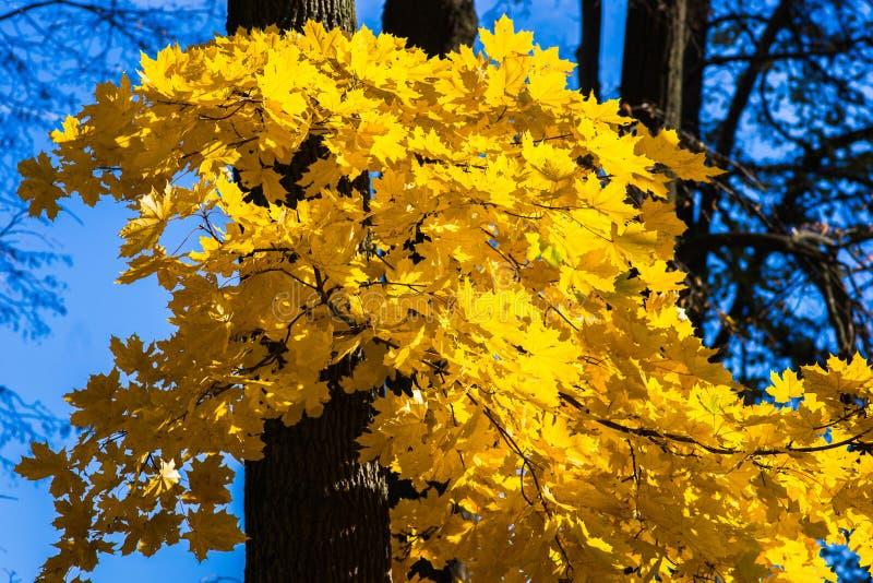 Oktober-Blau 10 lizenzfreies stockbild