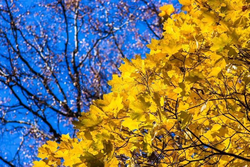 Oktober-Blau 12 stockbild