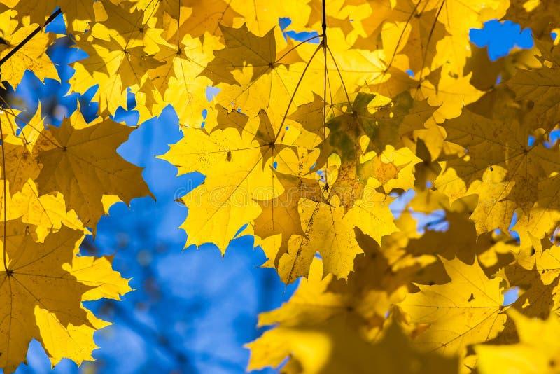 Oktober-Blau 8 lizenzfreie stockfotos