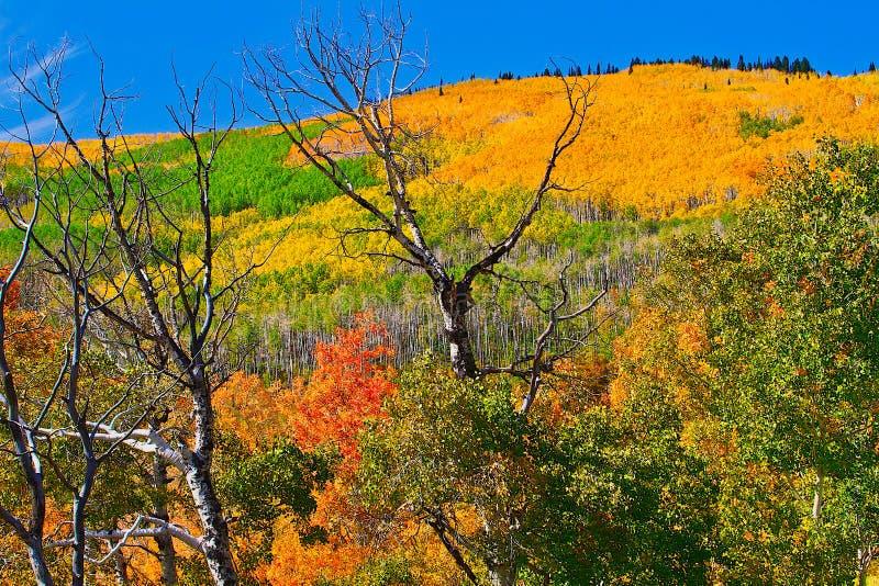 Oktober op Grote Mesa stock foto