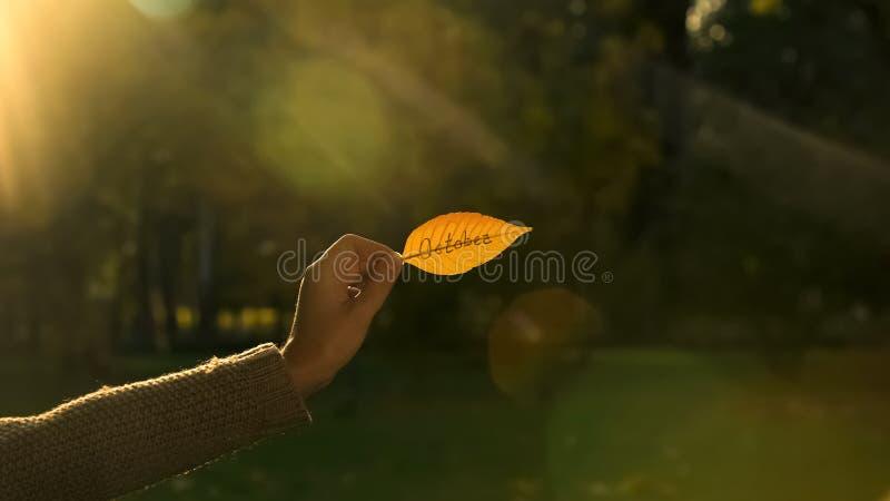 Oktober som är skriftlig på det guld- höstbladet, hand som rymmer handstilar, ljus nedgångsäsong arkivbild