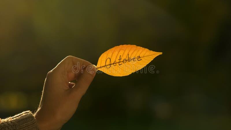 Oktober som är skriftlig på höstbladet, hand som rymmer handstilar, ljus guld- nedgångsäsong arkivbild