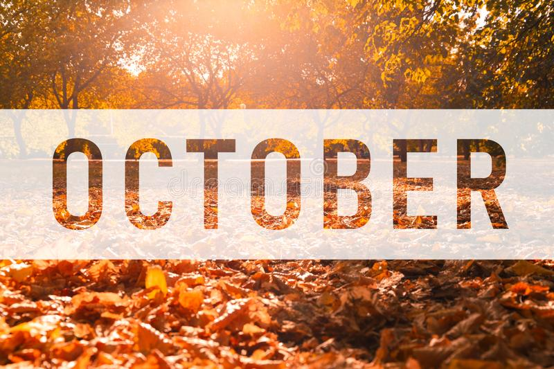 Oktober, Text auf bunten Fallblättern grüßend lizenzfreie abbildung