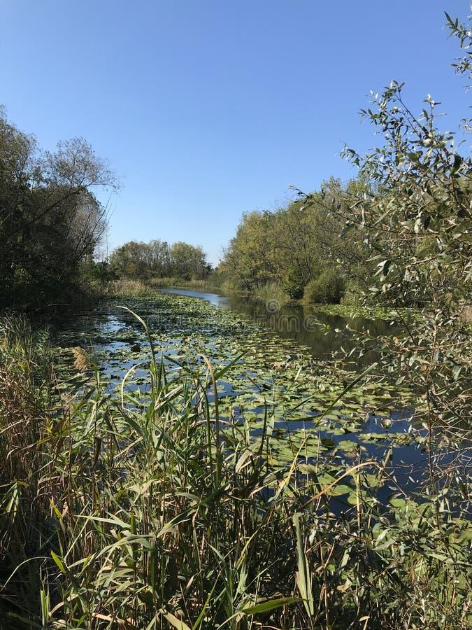 OKTOBER 2018, tweede grootste zoetwater het moerasbos van Turkije: Acarlar in Sakarya, Turkije stock foto