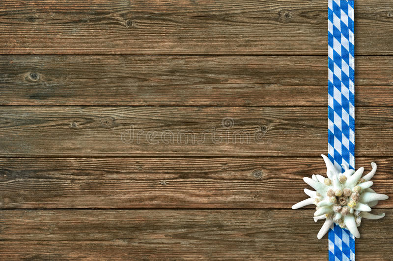 Oktoberfest background with edelweiss and Bavarian ribbon royalty free stock images