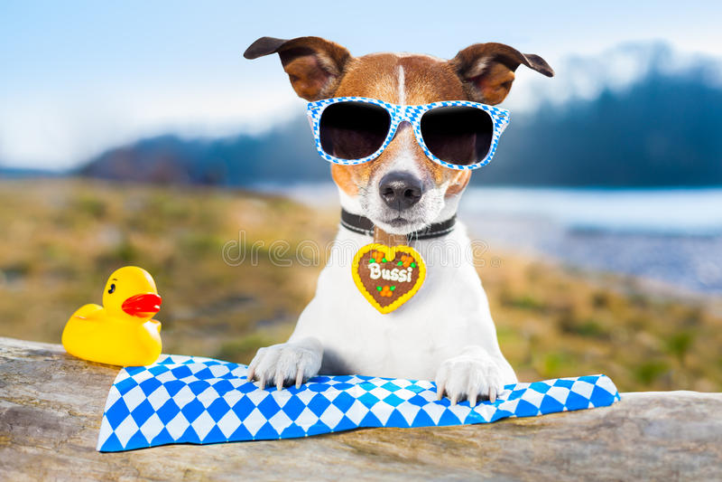 Oktoberfest dog royalty free stock photo