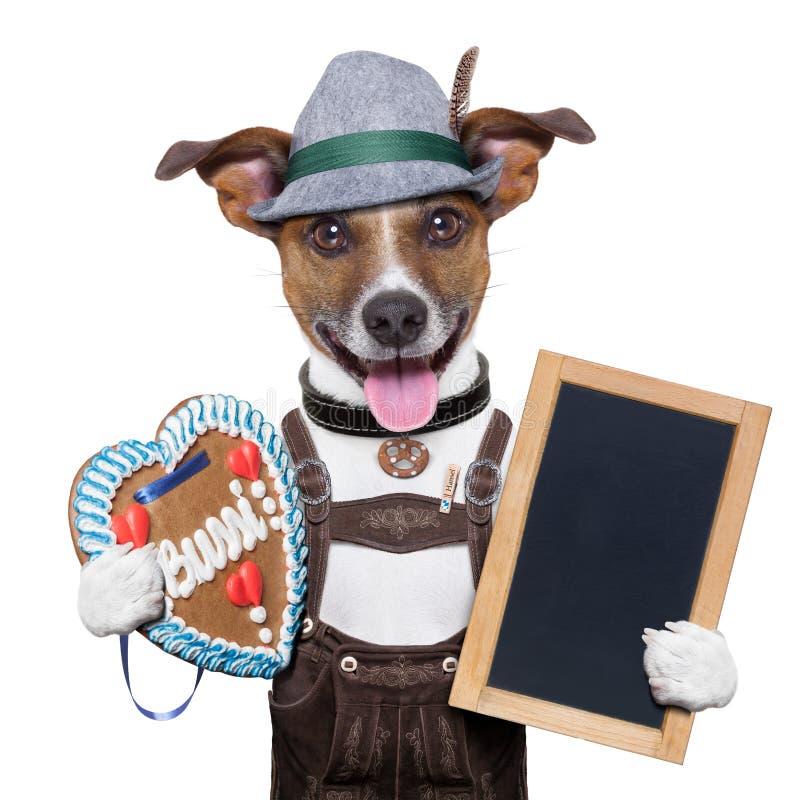 Oktoberfesthond royalty-vrije stock afbeelding