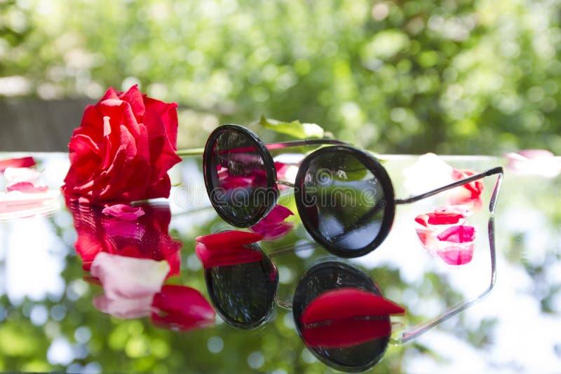 Okulary przeciwsłoneczni z rewolucjonistki różą w naturze obrazy stock