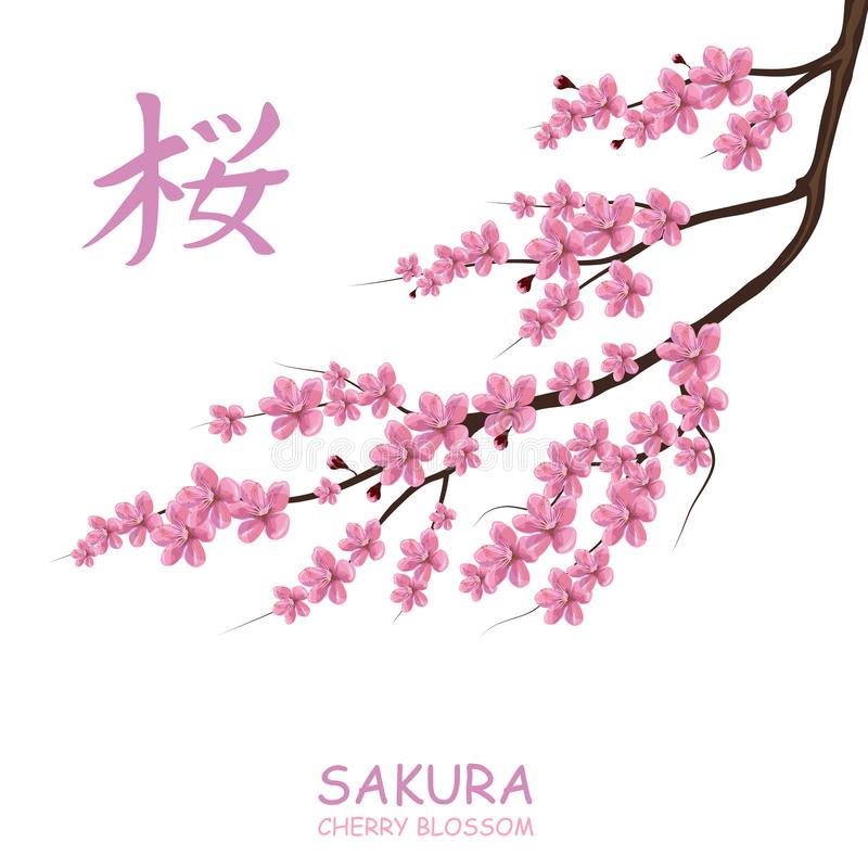 Okwitnięcia czereśniowy drzewo Tradycyjny japończyk Sakura ilustracji