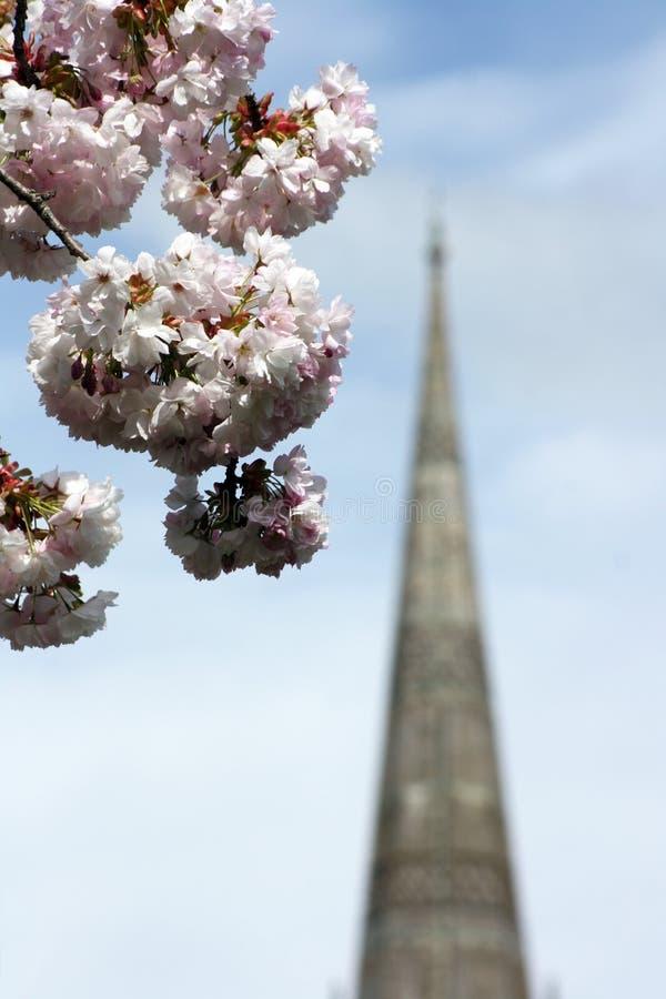 okwitnięcia katedry iglica zdjęcia royalty free