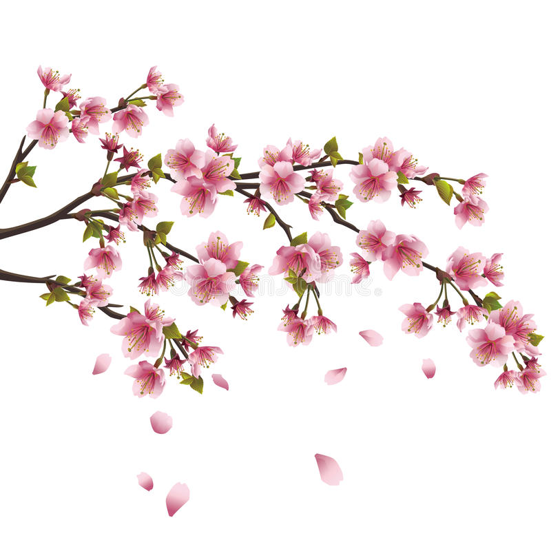 okwitnięcia wiśni odosobniony japoński Sakura drzewo ilustracja wektor