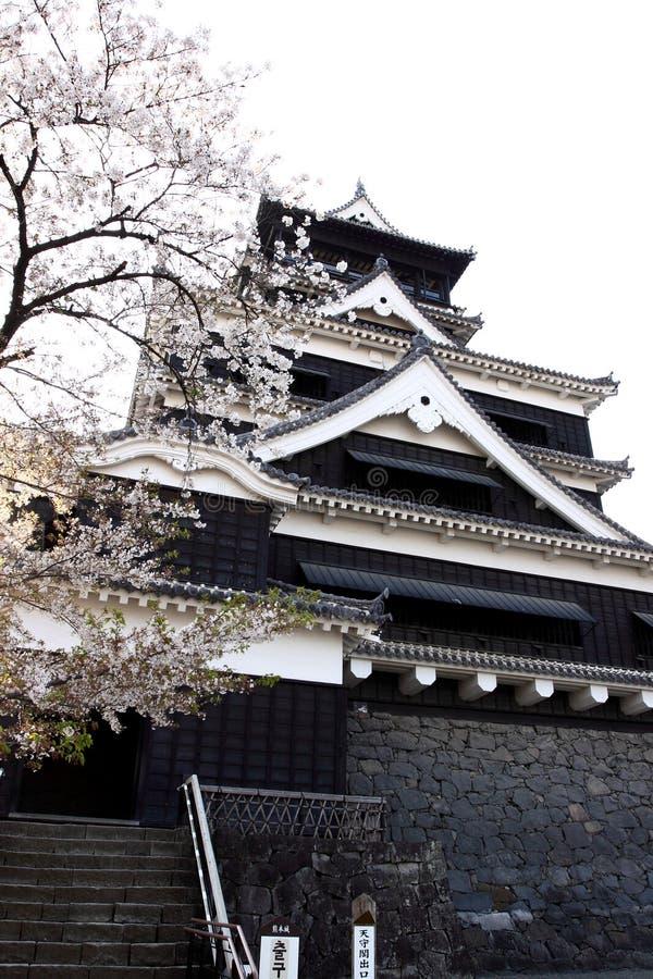 okwitnięcie grodowy czereśniowy Kumamoto fotografia royalty free