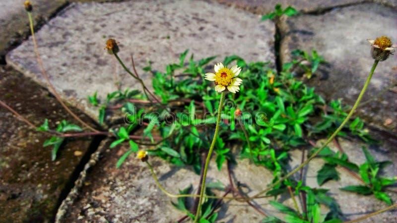 Okwitnięcie kwiat blisko drogi obraz royalty free