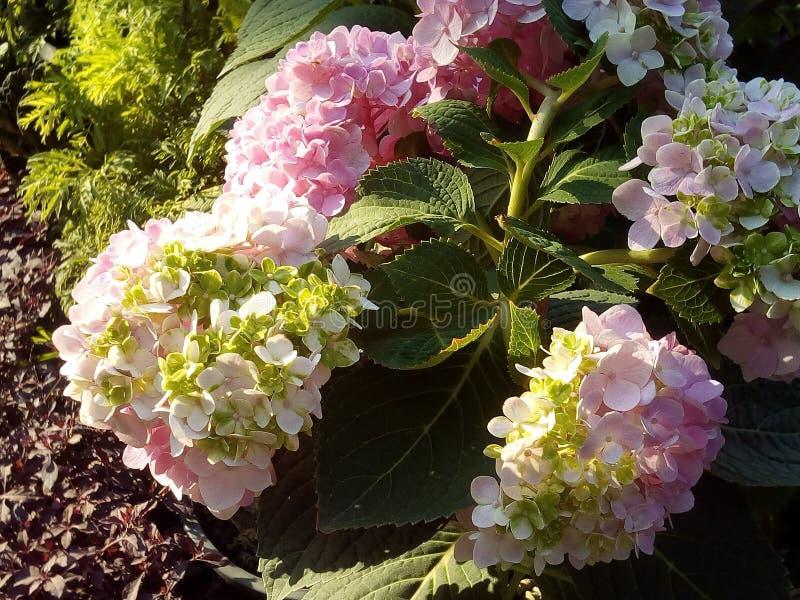 Okwitnięcie kwiatu okwitnięcia kolor żółty zdjęcia stock