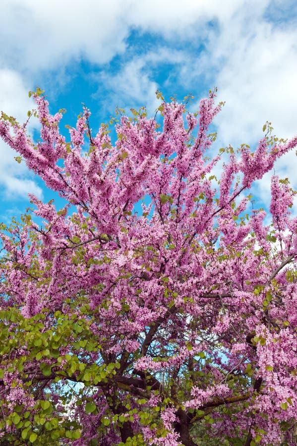okwitnięcie wiosna zdjęcia royalty free