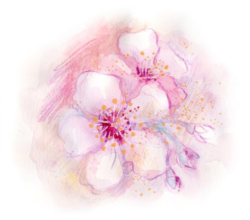 okwitnięcie wiosna ilustracji