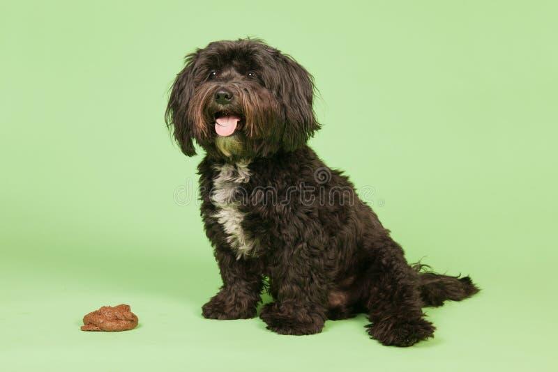 Okysk hund royaltyfri foto