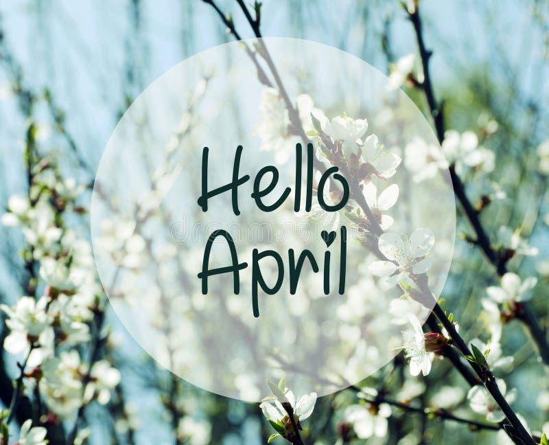 Olá! abril Ramos borrados das flores de cerejeira em um fundo do céu azul fotografia de stock