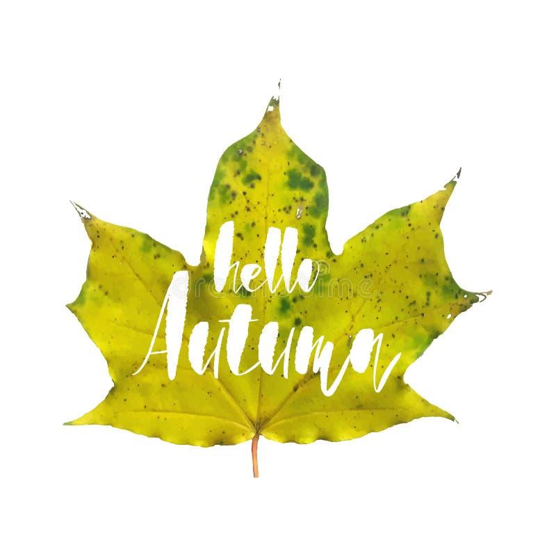 Olá! cartão do outono com a folha de bordo realística isolada no fundo branco para seu cartaz, cartaz, cartão ou ilustração royalty free