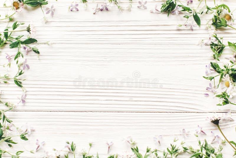Olá! configuração do plano da mola flores lilás da margarida fresca e ervas verdes imagens de stock royalty free