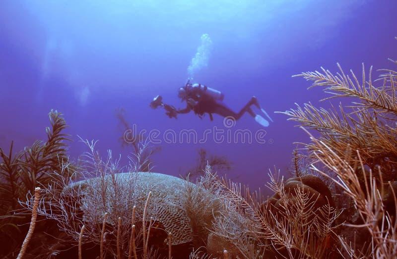 Download Olá! lá foto de stock. Imagem de corais, curso, esporte - 109258