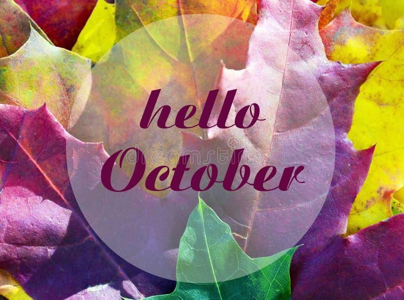 olá! outubro Fundo colorido das folhas de bordo com texto Conceito do outono Por do sol no parque imagem de stock royalty free