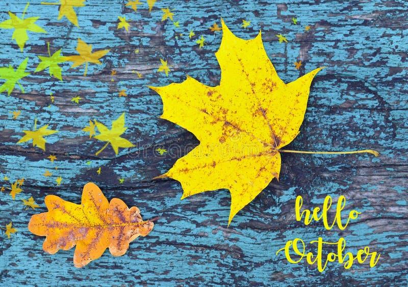 olá! outubro O fundo colorido do outono com as folhas de outono no azul coloriu a textura de madeira velha Folha amarela do bordo fotografia de stock