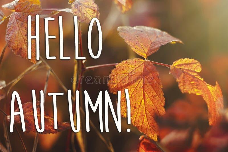 Olá! sinal do texto da queda do outono nas folhas de outono vermelhas bonitas em t fotografia de stock