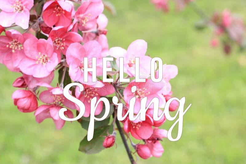 Olá! texto da mola no fundo de florescência do ramo de árvore imagem de stock