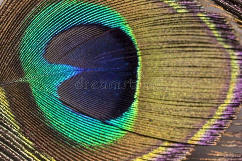 Olśniewający oko Pawi piórko - Zamyka w górę fotografia stock