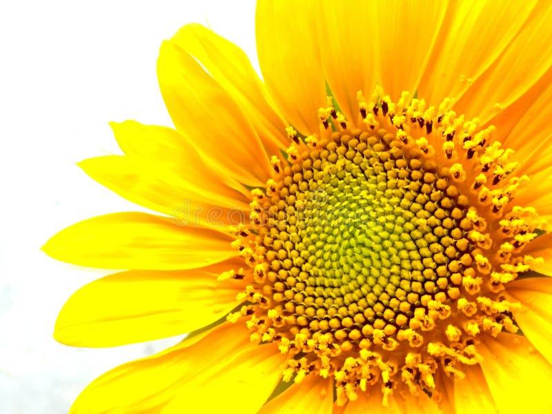 Olśniewający jaskrawy słońce obrazy royalty free