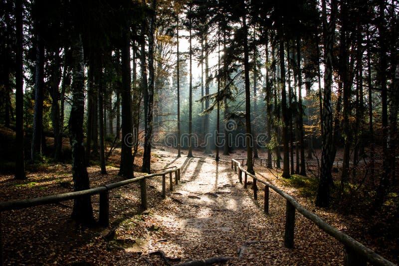 olśniewający słońce w lesie obraz stock