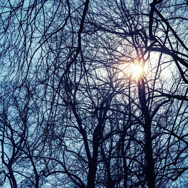 Olśniewający słońce z obiektywu racą w nagich drzewo sylwetkach fotografia stock