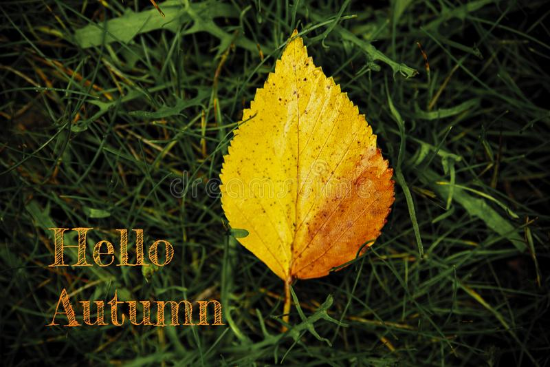 Ol?! folhas de outono imagem de stock