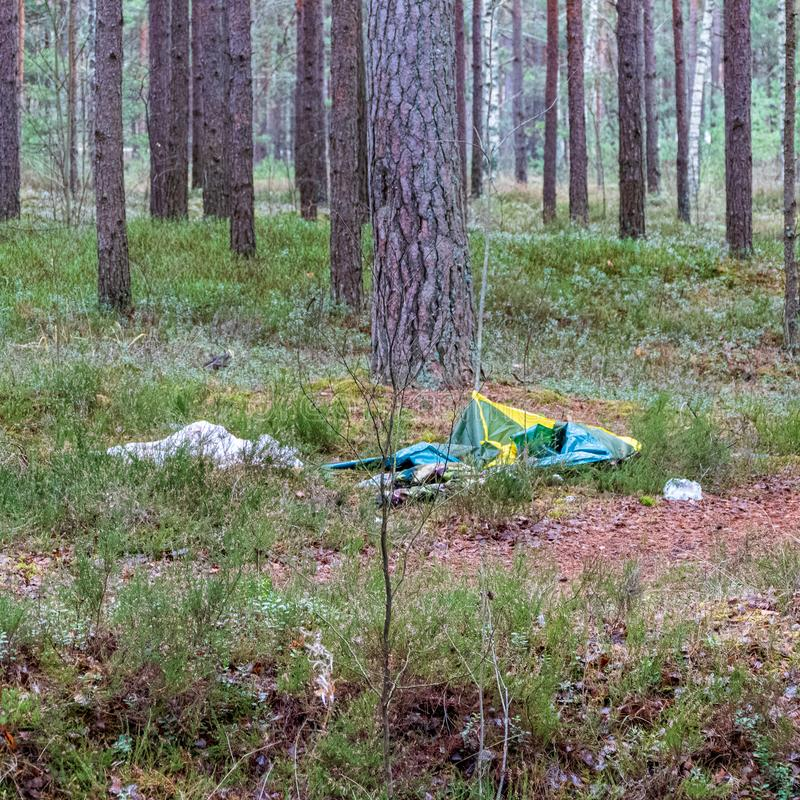 olaglig dumpster i träskogen i sommar arkivbild