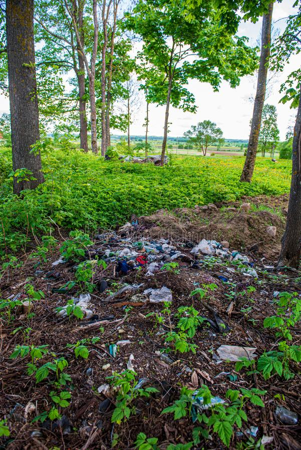 olaglig dumpster i träskogen i sommar royaltyfri bild