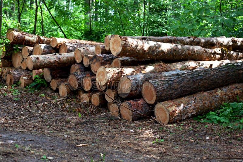 Olaglig export av skog, avskogning i reserven royaltyfri bild