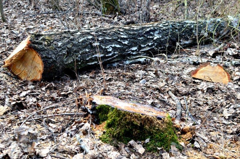 Olaglig skogsavverkning, f?rst?relse av naturen, global katastrof, problemet av ekologi royaltyfria bilder