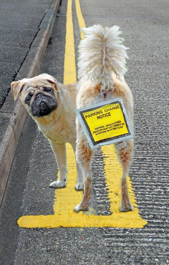 Olagligt parkerad hund på gula dubbla linjer som parkerar husdjur arkivfoton