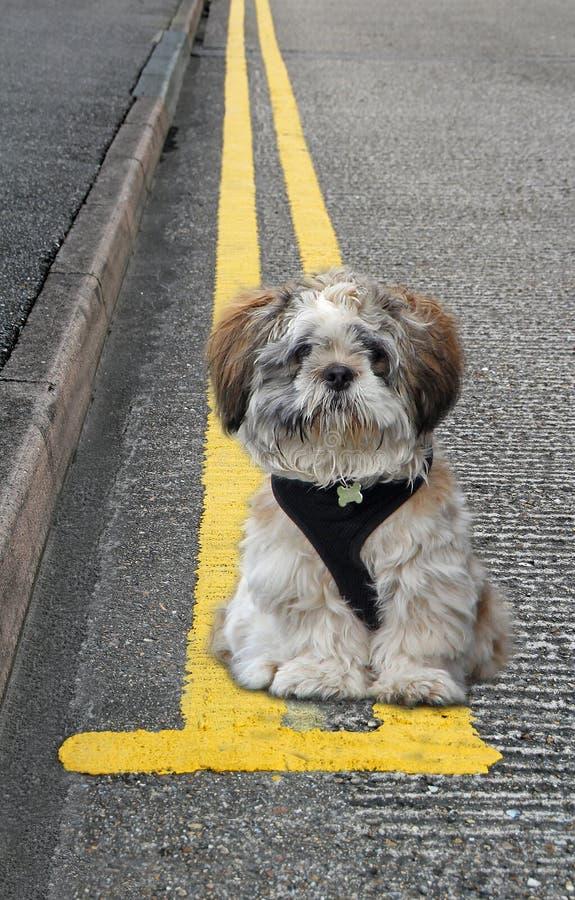 Olagligt parkerad hund på gula dubbla linjer som parkerar husdjur arkivbild
