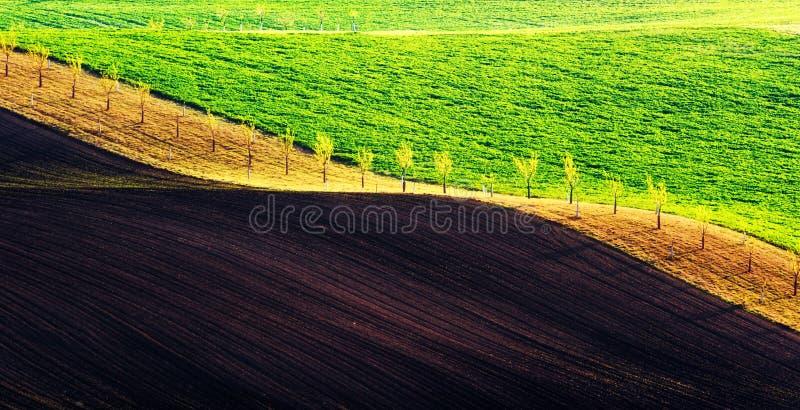 Olas verdes y marrones de los campos agrícolas imagen de archivo