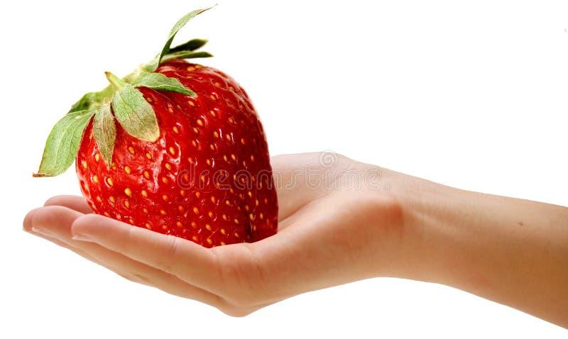 olbrzym berry obrazy stock