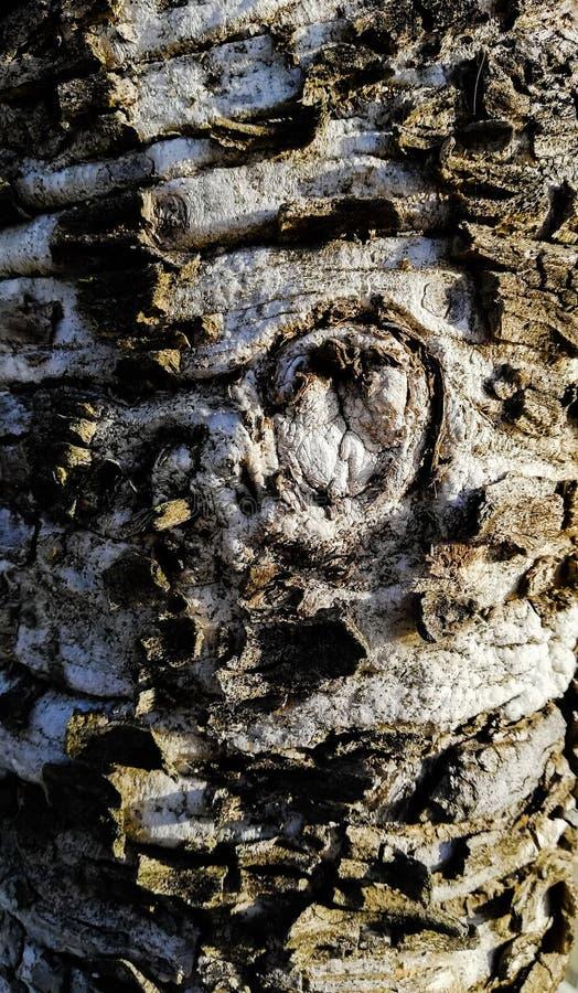 Old†‹tree†‹ στοκ εικόνες